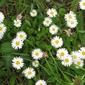 Снимах пролетта в Попово